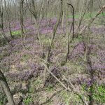 Terebesi erdő virágok