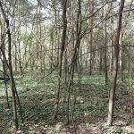 Terebesi erdő mező