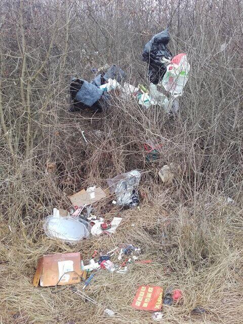 Budakeszierdő környezetgyalázása. Fotó: hulladekvadasz.hu