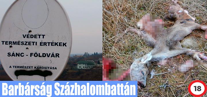 Természetvédelmi területen kivégeztek egy őzet
