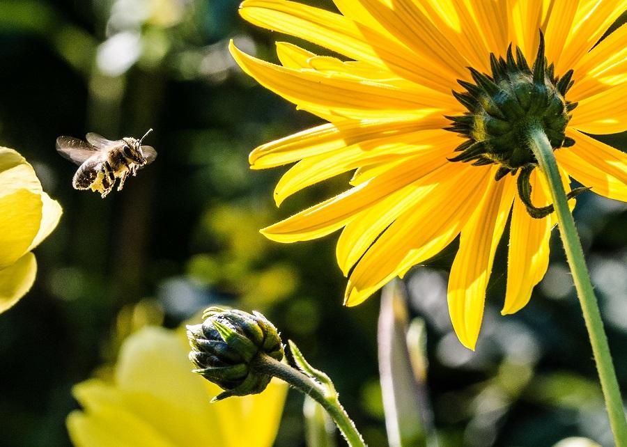 A neonikotinoid vegyszer nem csak a méhekre ártalmas. Fotó: Greenpeace.org