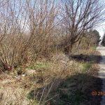 Kommunális hulladék elérhetőségek rejthet Velencén (Frissítve)