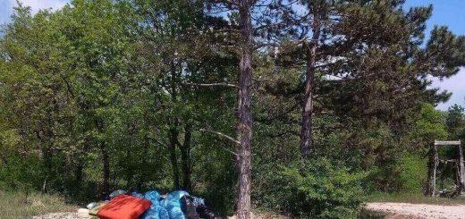 Csopak térségében erdőben lerakott hulladék