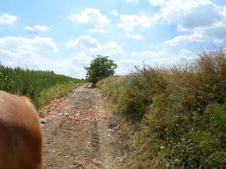 Kóka külterületi földútjára kihelyezett építési hulladék. / Fotó: hulladekvadasz.hu