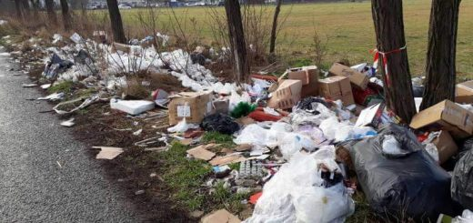 Béga utca fasorának tövében hulladéklerakások