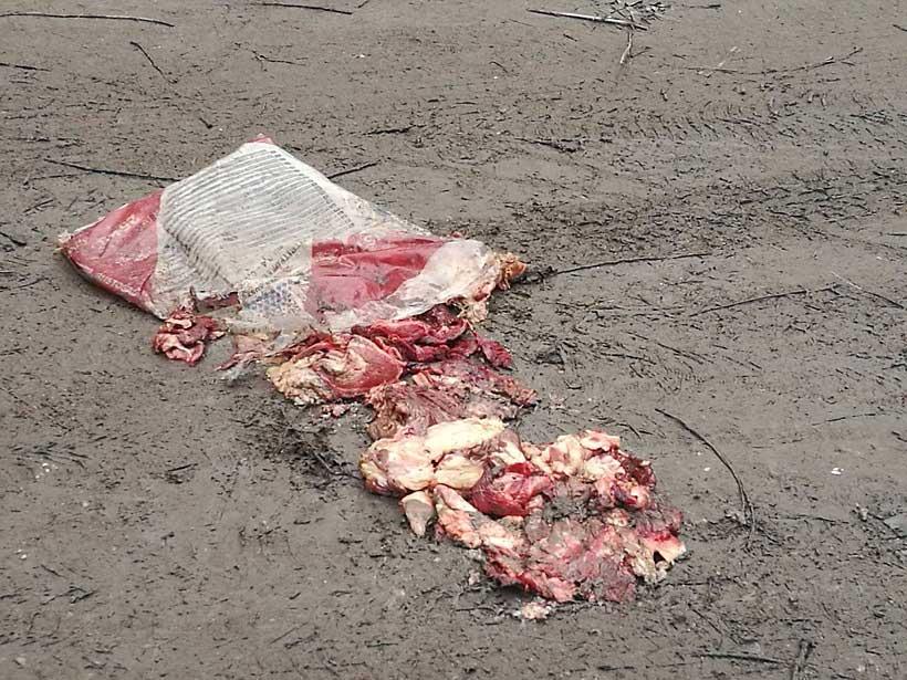 Állati belek, egyáltalán nem állati, ahogy a földön hever. / Fotó: hulladekvadasz.hu