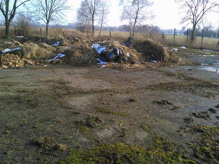 Zöldhulladék halmokban. / Fotó: hulladekvadasz.hu