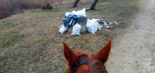 Lovas hulladékvadászat Debrecenben