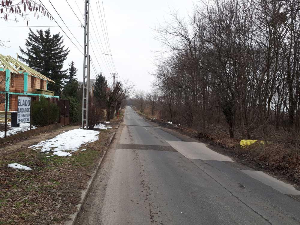 A Pesti határút melletti erdősávban kirívóan virít a sárga gumi. / Fotó: hulladekvadasz.hu