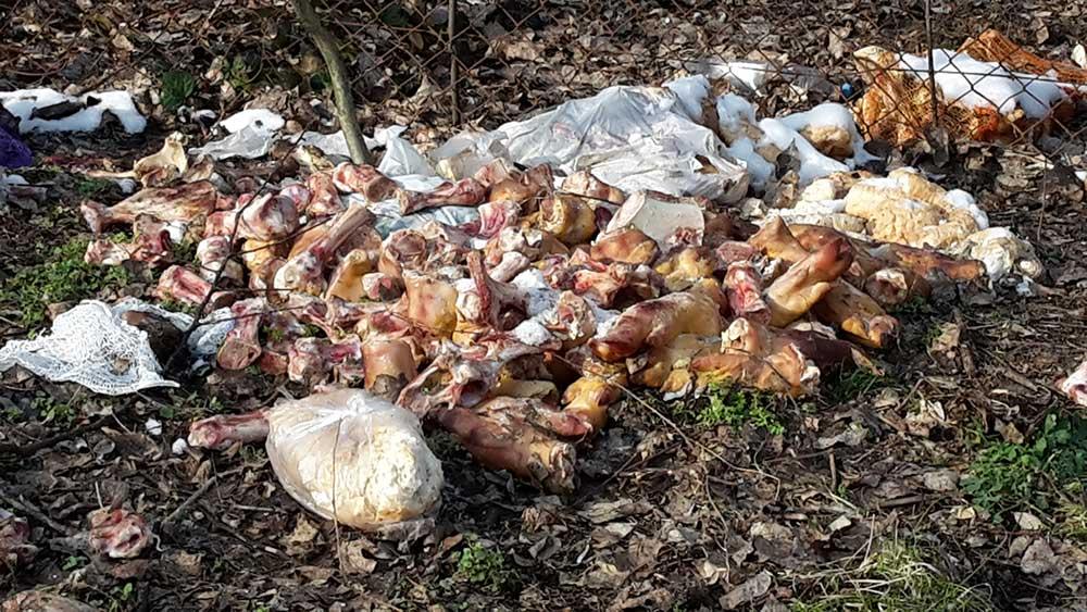 Állati maradványok rohadó bűze lengi körbe a helyszínt. Érzitek? / Fotó: hulladekvadasz.hu