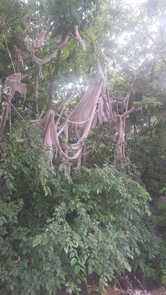 Elképesztő látvány, a fákról csüngő csomagolóanyag. / Fotó: hulladekvadasz.hu