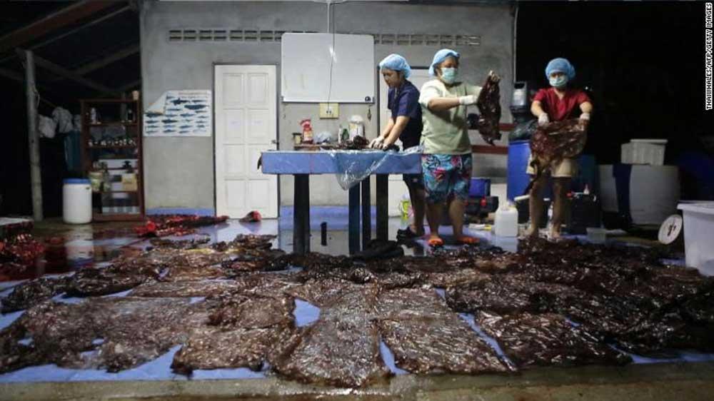 A tengeri állatorvos és az önkéntesek műanyag zsákokat mutatnak be a halott állat gyomrából. / Fotó: ThaiWhales