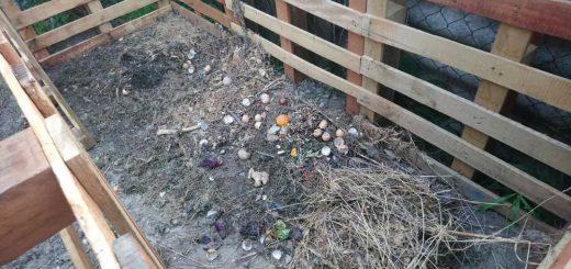 Háztartási zöldhulladék, avagy mi mehet a komposztba
