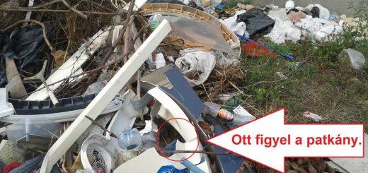 Patkányok és hulladék a XV. kerületi MÁV őrháznál