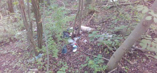 Szekszárdi Szőlőhegy szemétkupacai az erdőben