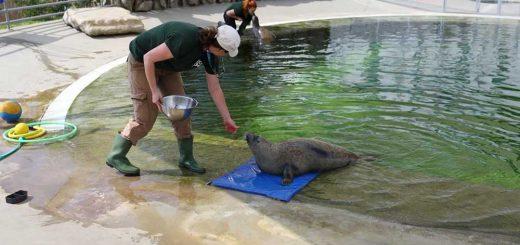 Pécsi Állatkert hulladékkal szennyezett akváriumot állított ki
