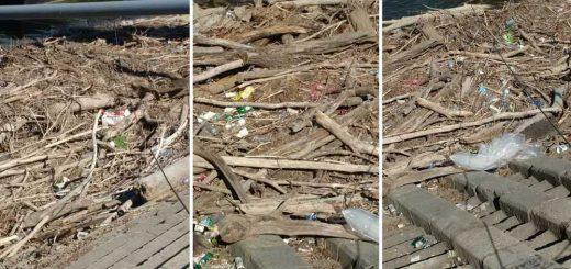 Uszadékfa, műanyaghulladék, patkányok a Szabadság híd lábánál