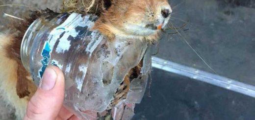 Vörös mókus halála: PET palackba szorulva elvágta a torkát