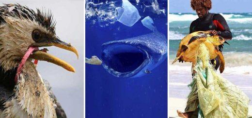 Műanyaghorror az állatvilágban - erős idegzetűeknek