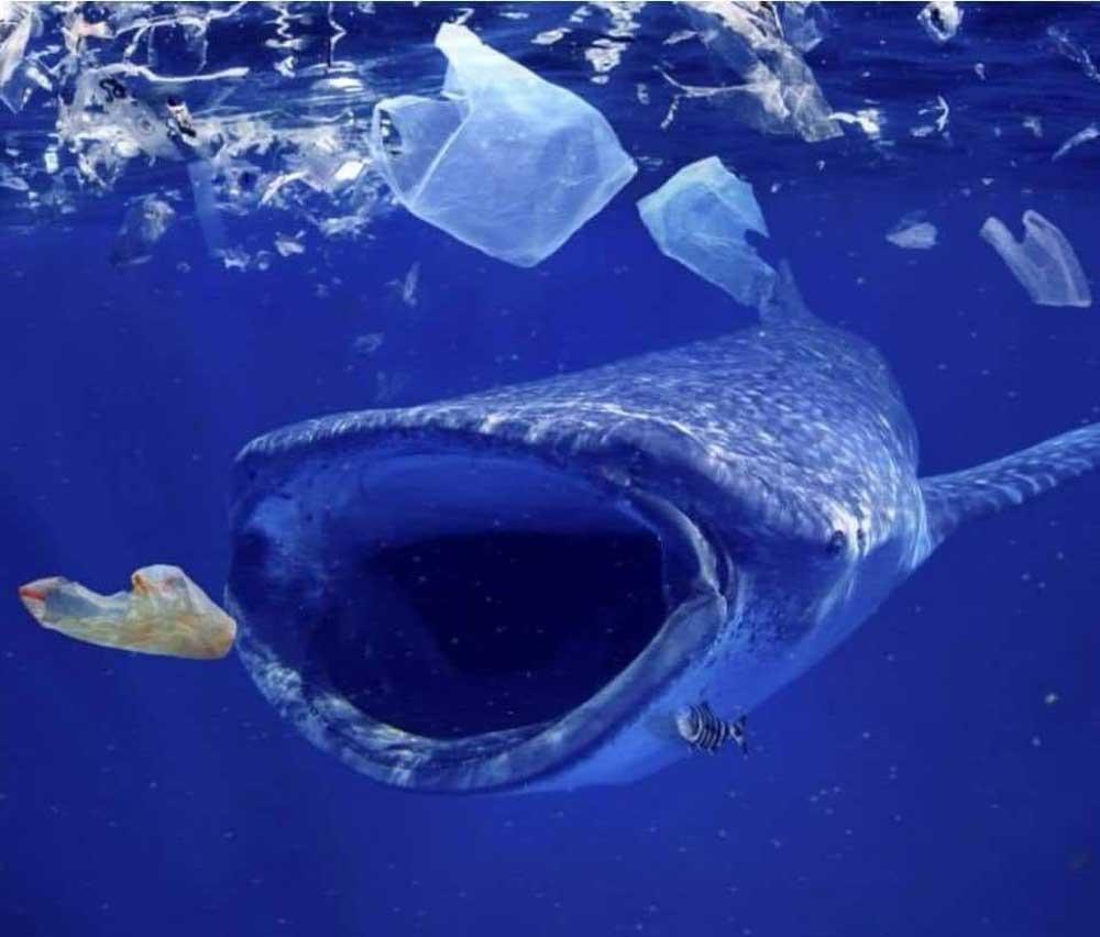 Ez a kép mindent elmond ezer szónál. Horgászatból származó háló okozhatta volna a teknős halálát. / Fotó: facebook.com/ConociendoHonduras