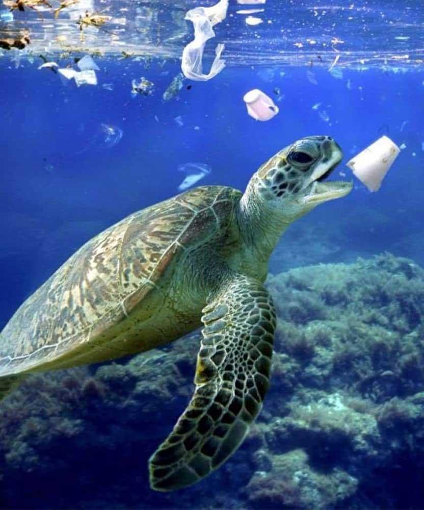 Rengeteg vízi élőlény halálát okozza a műanyag, mert tábláéknak nézik. / Fotó: facebook.com/ConociendoHonduras