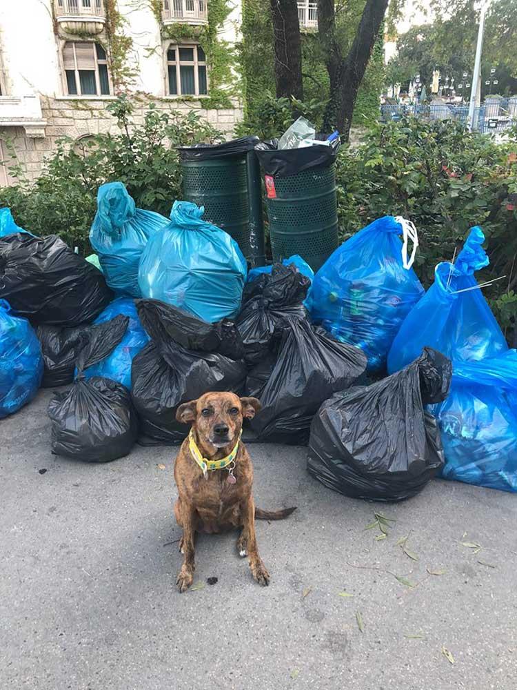 Az esemény legcukibb önkéntese, Lina a kutyus volt.