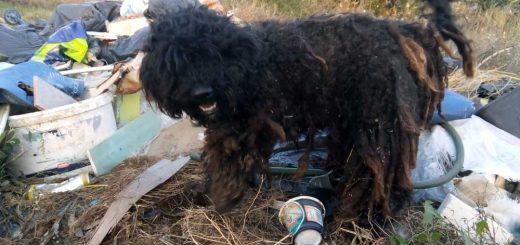 Kutyával együtt kidobott hulladék Szegeden