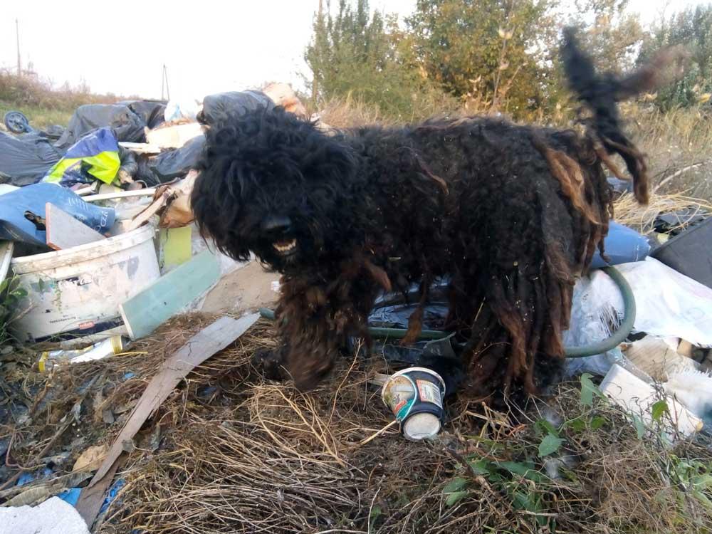 Hatalmas köszönet a helyieknek, akik szóltak a környékbeli állatmentőknek és a kutya jó helyre került.