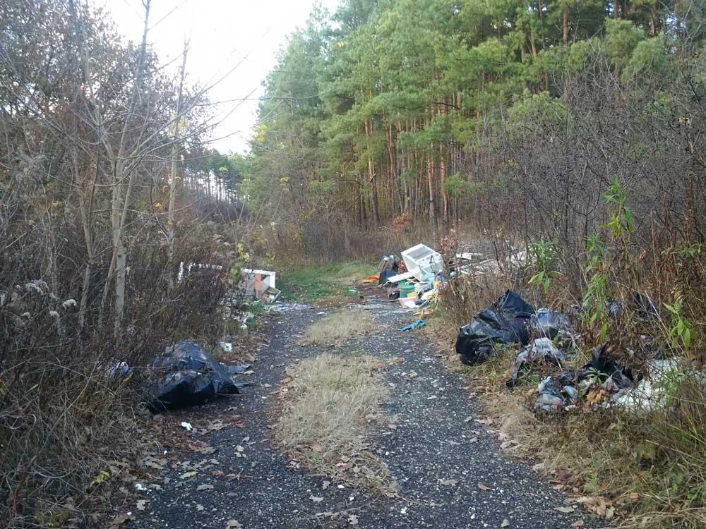 A fenyőerdőbe érve ez a látvány fogad bennünket. Több hulladék van itt, amit hinnénk elsőre.
