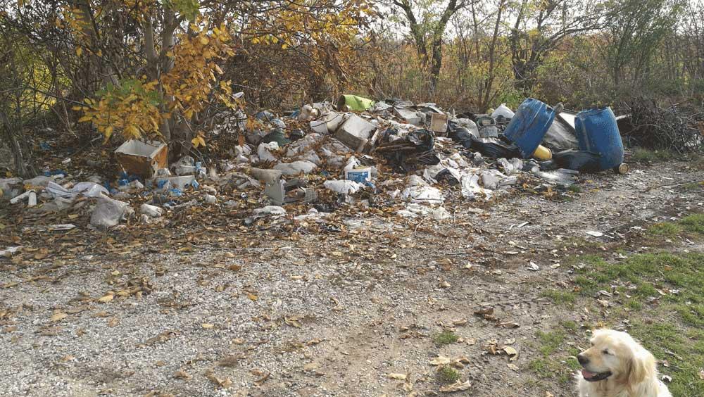 Mindenféle veszélyes hulladékkal teli szemétdombra még a kutyus is félve néz rá.