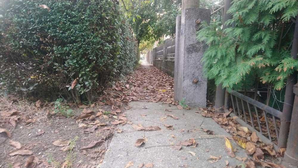 Diólevél az utcafronton. Érdemes még innen is összeszedni és a diófa-komposztunkba tenni. / Fotó: hulladekvadasz.hu