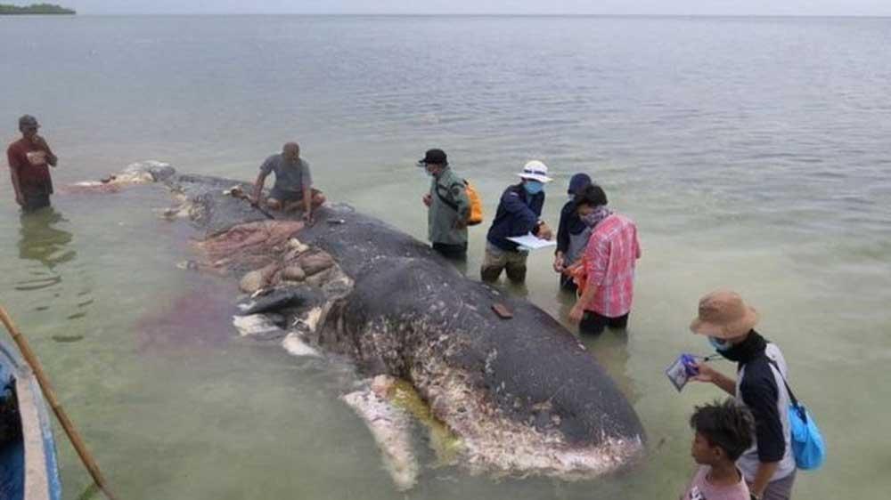 A bálnában talált 146 műanyagtermék között voltak poharak, műanyag üvegek, műanyag szatyrok és strandpapucsok. / Fotó: bbc.com