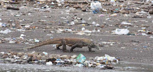 Komodo Nemzeti Park is a műanyagtól fuldoklik