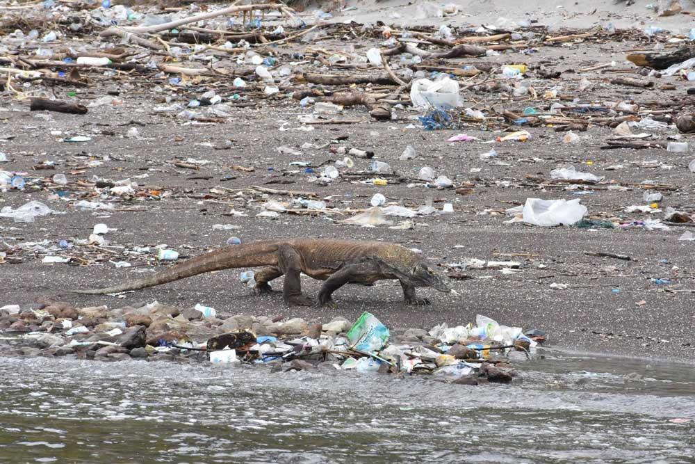 A komondoi varánuszok vajon megeszik a műanyagot?
