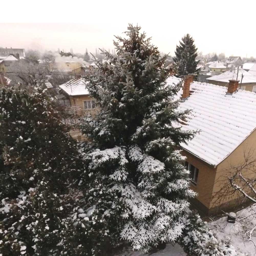 Szebenyi Péter gyerekkori karácsonyfája: 8 méter magas, közel 20 éves fenyőfa. / Fotó: peterszebenyi.com