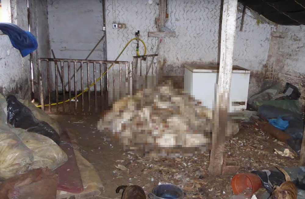 Vidéki horror: Kacsatetemekkel etették a sertéseket