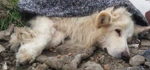 Állatkínzás: szemétdombra dobták a beteg kutyát