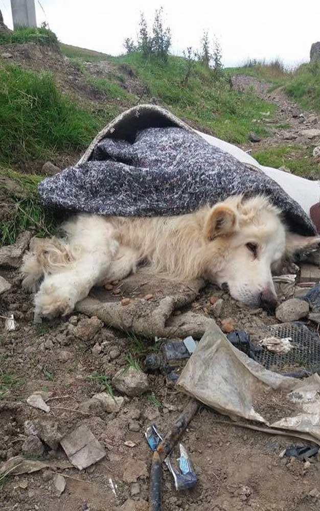 A szemétdombra hajított kutya. / Fotó: kutyafan.hu