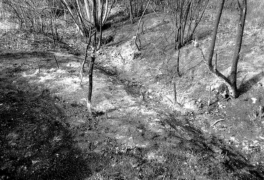 Zsáka-Furta határában kitakarított terület.