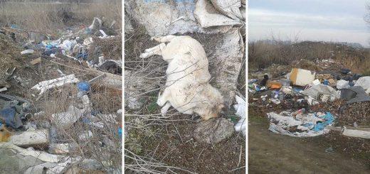 Elpusztult háziállat és több tonna hulladék Besenyőteleken