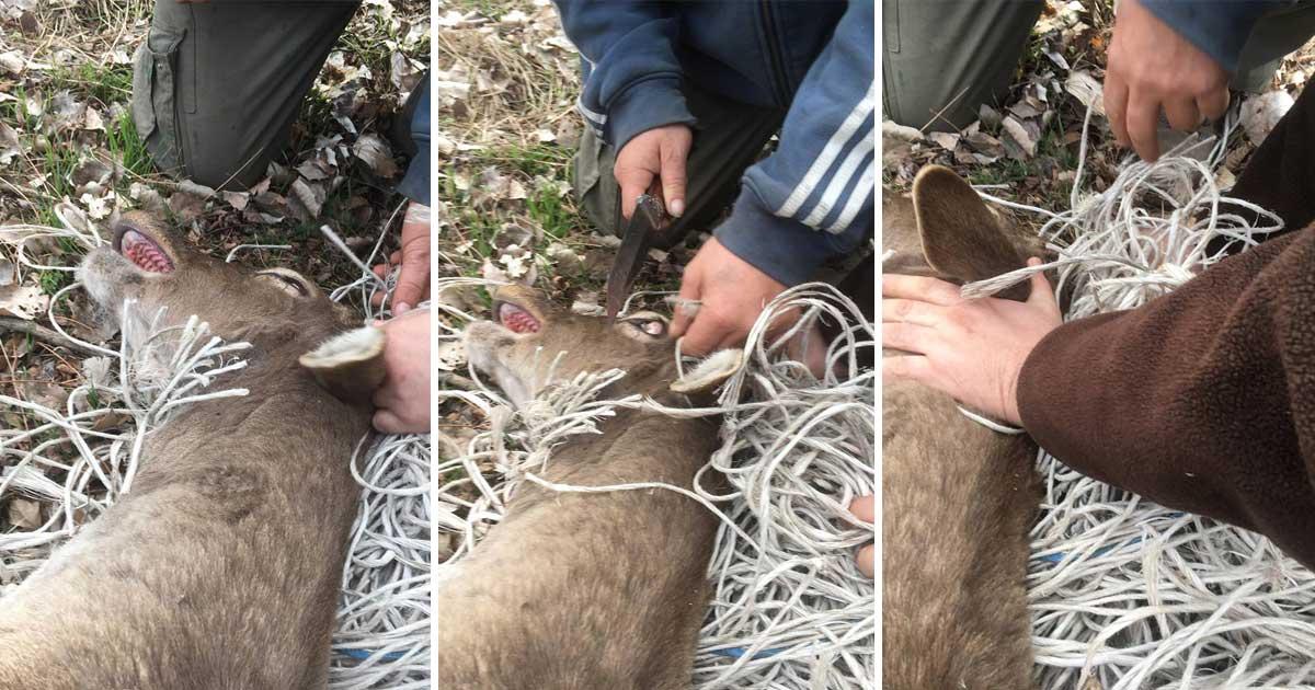 Biztos kezek között a szarvas megmenekült a hulladék fogásából. / Fotó: Újlengyel Lovas Polgárőr