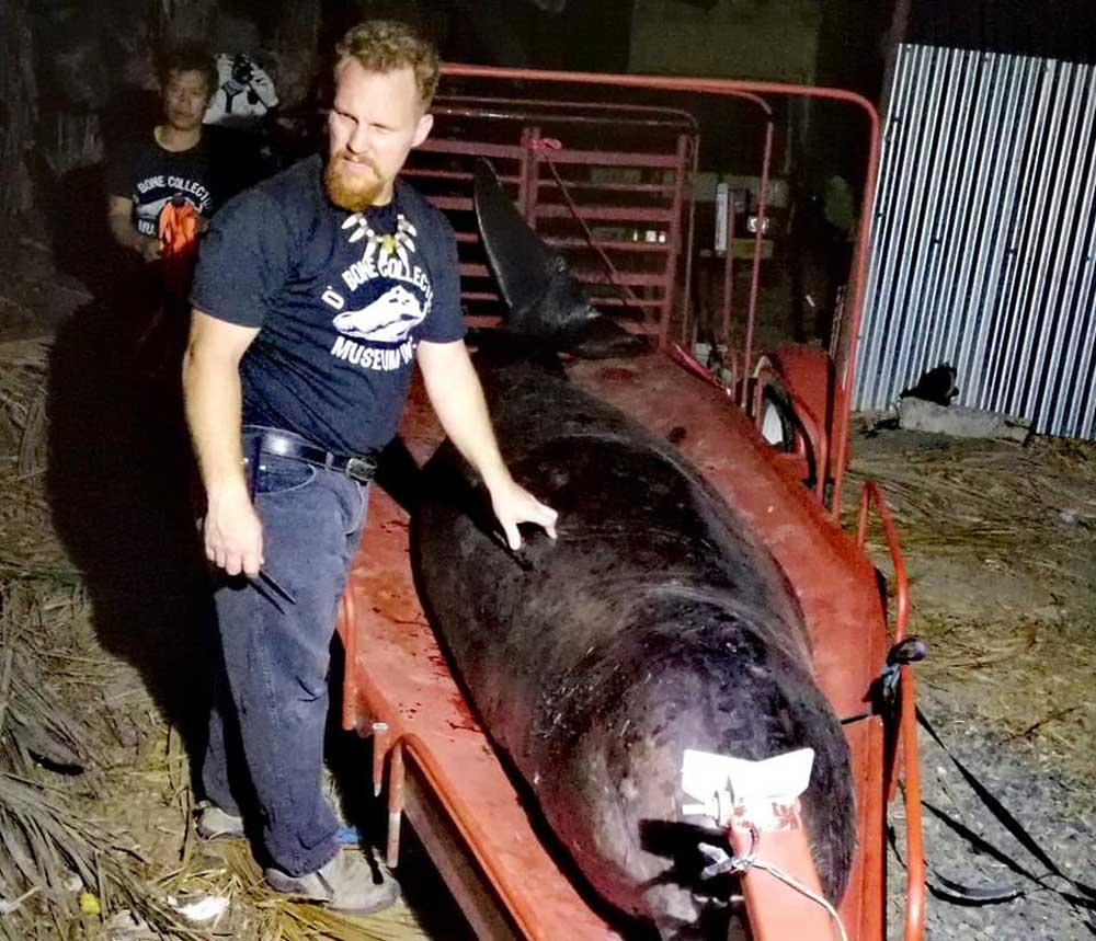 A kutató hozzákezd a bálna felboncolásához. /Fotó: D' Bone Collector Museum Inc.