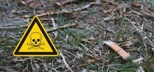 Mérgezik a talajt az eldobott cigicsikkek!