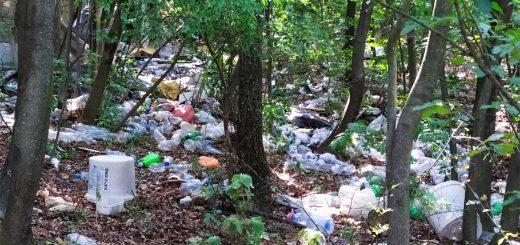 PET palack rengeteg az óbudai Mátyás-hegyen