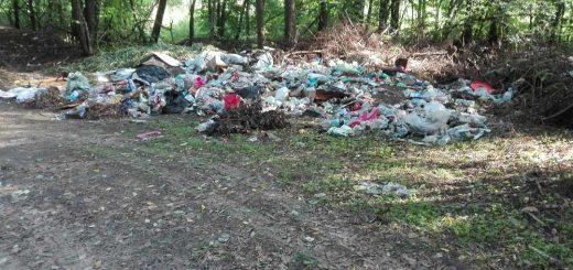 Vácrátóti erdő a hulladék fogságában
