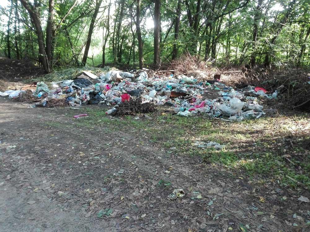 Több tonnányi hulladék hever a vácrátóti erdő fái tövében ...